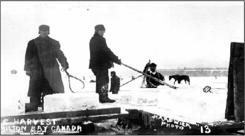 The great ice sheds along the bayfront were filled to capacity during this harvest and you could see sleighs loaded with blocks of ice moving up the streets constantly.
