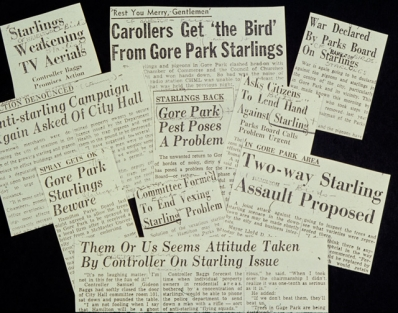 The Starling Problem, 1950s